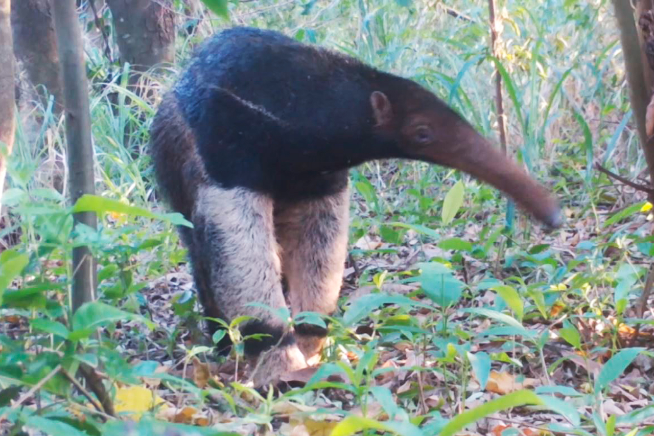 Projeto ambiental recupera áreas nativas e reabilita fauna silvestre